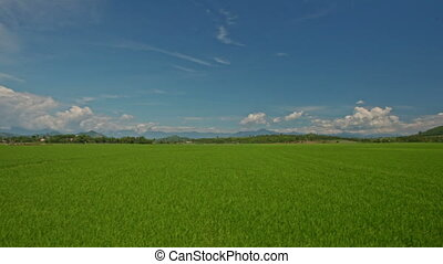 Camera Moves along Rice Fields against Blue Sky in Vietnam -...