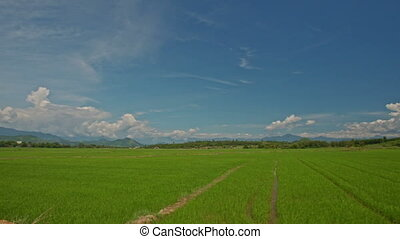 Camera Moves along Green Rice Fields against Sky in Vietnam...