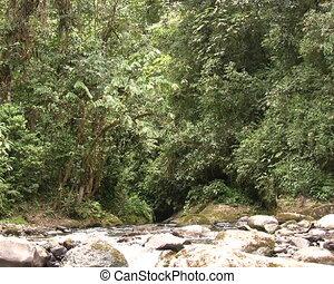 Rio Nambillo in Western Ecuador - Near Mindo, Ecuador