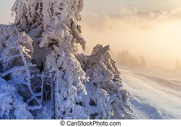 Natale, fondo, con, nevoso, abete, albero