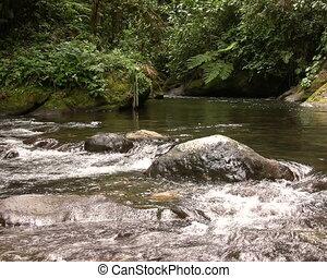 Rio Nambillo in Western Ecuador