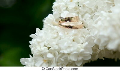 two gold wedding rings lie on a branch of white lilac