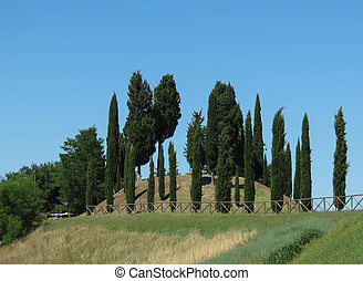 A row of Cypress trees - Cypress (Cupressus sempervirens)...