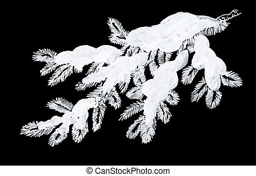 Coniferous pine branch in snow greeting card. - Coniferous...