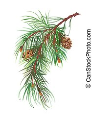 Watercolor coniferous branch with pine cones. - Watercolor...