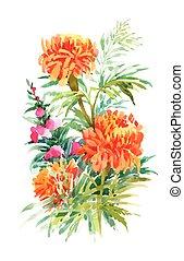Beautiful Marigold Flower isolated on white background....