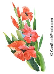 Watercolor garden gladiolus flowers on white background. -...
