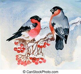 Bullfinch birds on snowy tree branch. Watercolor...