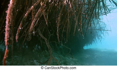 Tree roots and rocks in Yucatan Mexican cenote - Tree roots...