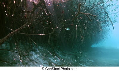 Tree roots and rocks in Yucatan Mexican cenote. - Tree roots...