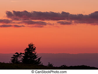 Gnarly Pine Trees with Pink Sunset dropping behind the Blue...