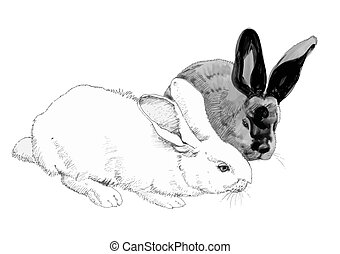 Sketched cute rabbits illustration. - Sketched cute rabbits...