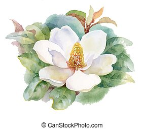 Watercolor Summer blooming white magnolia flower. -...