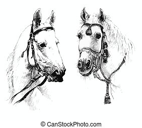 Set of black and white ink hand drawn horses heads.