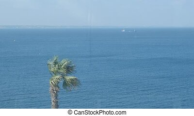 Palm tree and ship in background.
