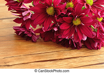 Maroon asters