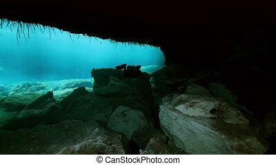 Underwater landscape and vegetation in lake cenote