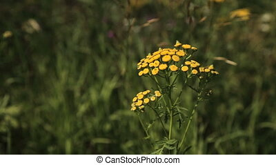 Beautiful yellow wildflowers. - Closeup on beautiful yellow...
