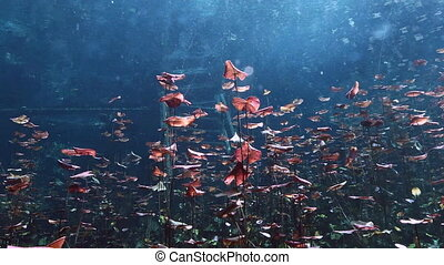 Underwater landscape and vegetation in lake cenote -...