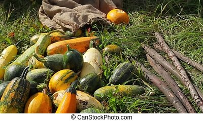 Pile of squashes. Vegetables lying on grass. Make salad for...