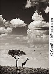 Giraffe and Tree - A giraffe and a tree seen through the...