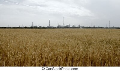 View of factory with beautiful natural field - Wheat field...