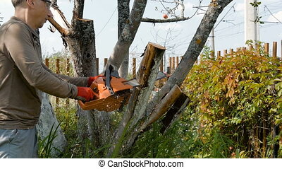 The gardener cuts the old branches on a tree, using a chain...