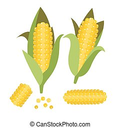 Corn vector illustration. Maize ear or cob. Yellow sweetcorn...