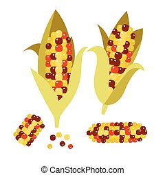 Flint or calico corn vector illustration Maize ear cob -...