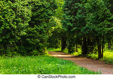 path in summer city park - path near old trees stand in city...