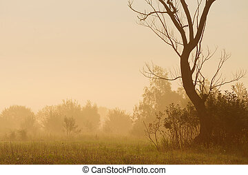 Dry tree and shrubs in mist at dawn horizontal