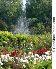 Fountain on rose lawn - Russia, Moscow City park `Sokolniki`...