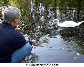 Mute swan makes a living from hands - Russia, Moscow....