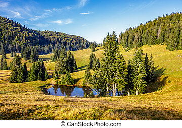 pine trees near lake on the meadow - mountain summer...