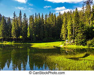 lake among the conifer forest - landscape near the lake...