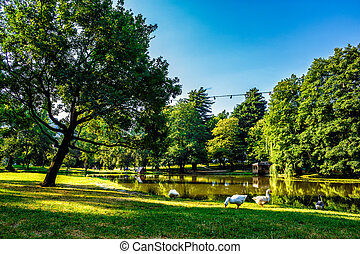 goose near the pond in park - three goose near the pond with...
