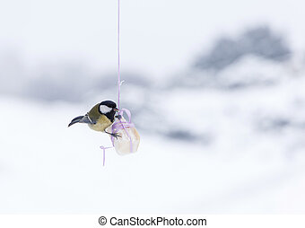 tomtit eating fat hanging on ribbon at winter