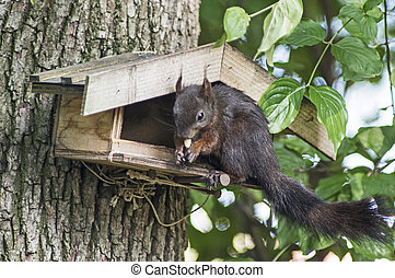 Squirrel plunders a birdfeeder - Brown squirrel on a...