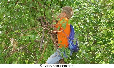 the child climbed the tree and picks up apples