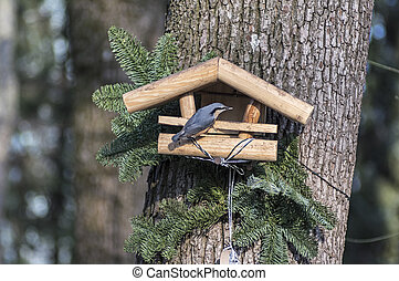 Nuthatch on a bird feeder