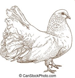 illustration of white dove - Vector engraving drawing...
