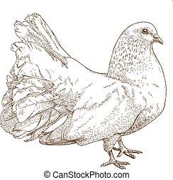 illustration of white dove