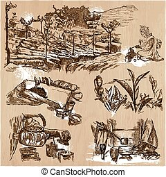 Tea Processing. Agriculture. An hand drawn vector...