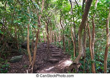 Pipiwai Trail - The Pipiwai Trail travels through a...