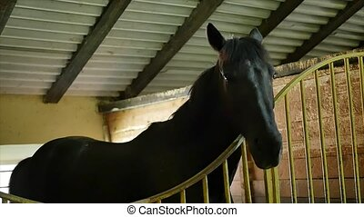 black white and brown Horses in their stable.