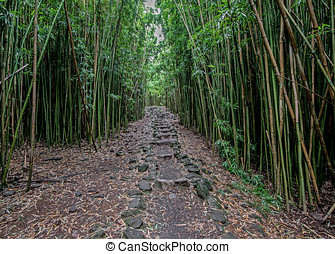 Pipiwai Trail - Stone path in the bamboo forest along the...