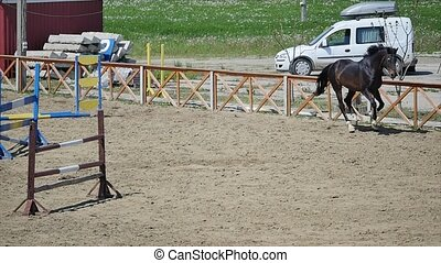 The horse running in the arena at summer time slow motion