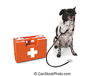 Dog With Stethoscope And First Aid Kit