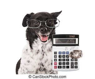 Accountant Dog With Calculator