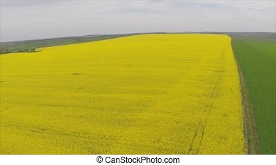 Amazing aerial view of yellow fields.